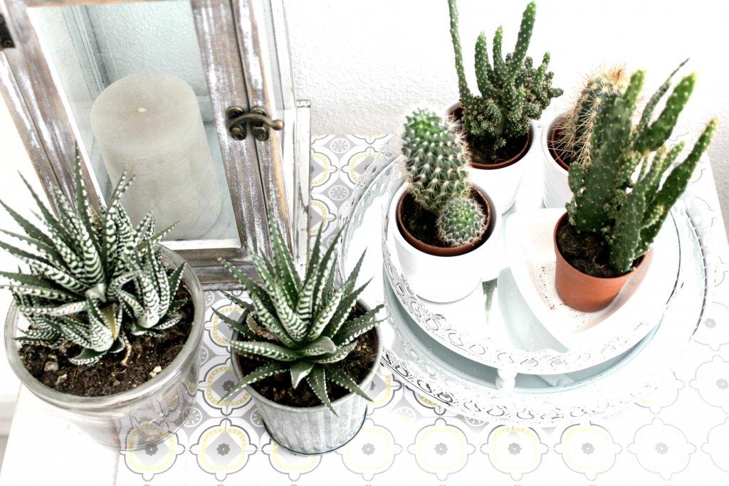 plante grasse deco