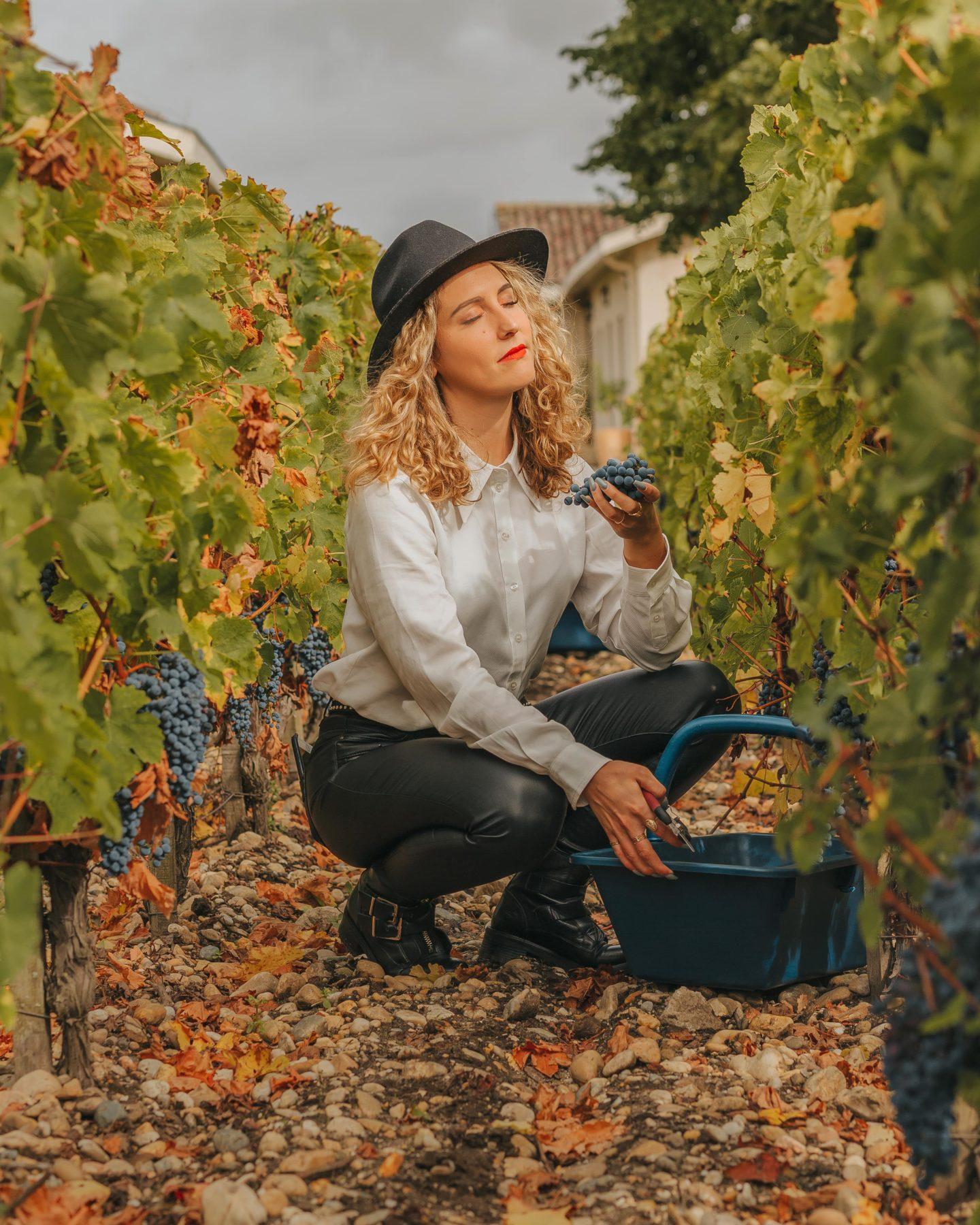 vendanges, octobre, médoc, saint-julien, Lagrange, cabernet sauvignon