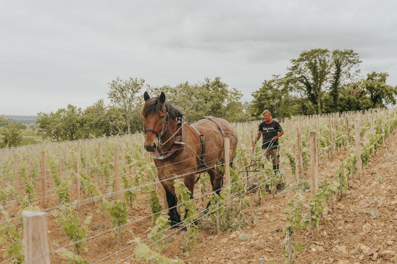 traction animale, biodiveristé, troplong mondot, château, agriculture