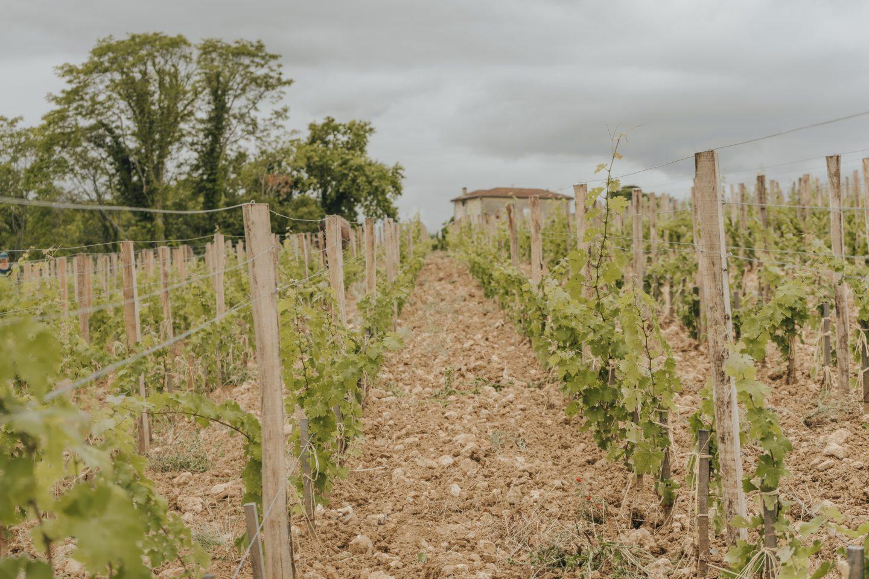 vignes, vignobles, saint-émilion, grand cru classé